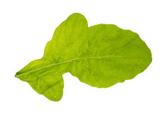 Arugula leaf Stock Images