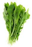 Arugula leaf Stock Photography