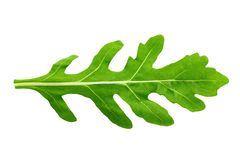 Arugula leaf isolated. One leaf of arugula on a white background isolated. clipping path royalty free stock photos