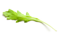 Arugula leaves Stock Photo
