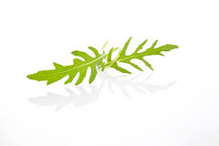 Arugula leaves . Royalty Free Stock Photo
