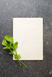 Arugula leaves with blank paper. The arugula leaves with blank paper stock photography
