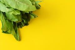 Arugula leaves. Fresh arugula leaves on yellow background. Organic concept royalty free stock photography