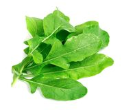 Arugula leaves Stock Image
