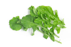 Arugula Leaves. Rucula. Over a white background stock image
