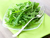 Arugula on plate Stock Image