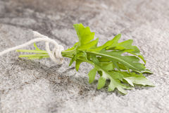 Arugula. Pot herbs. Stock Images