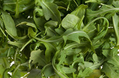 Arugula salad background Stock Photo
