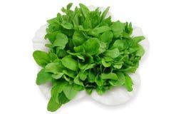 Arugula salad. Green arugula salad on a white plate Stock Image