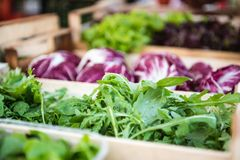 Arugula salad on market stall Royalty Free Stock Image