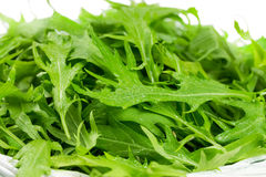 Arugula salad Royalty Free Stock Photo