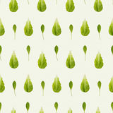 Arugula und Kopfsalat seamles Muster Stockfotos