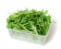 Arugula verde foto de stock royalty free