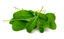 Arugula in a white background Royalty Free Stock Images