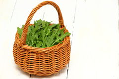 Arugula. A wicker basket with a handle full of fresh arugula over wooden background. Shallow DOF stock photo