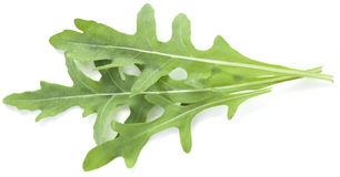 Arugula ziele Obrazy Stock