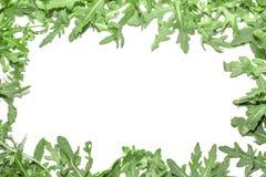 Arugulagräsplaner på en vit bakgrund Royaltyfri Foto