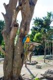 Arums lumineux de perroquets se reposant sur une branche d'arbre Photographie stock libre de droits
