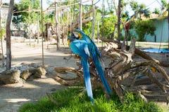 Arums lumineux de perroquets se reposant sur une branche d'arbre Image stock