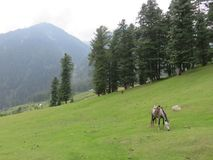 Arun valley Stock Image