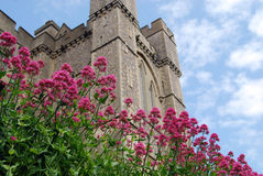 Arundel Castle. Pink flowers and facade at Arundel Castle, England Royalty Free Stock Images
