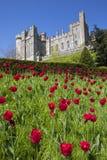 arundel slott västra sussex royaltyfria bilder