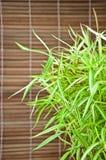 Arundinacea Willd de Bambusa et fond en bambou Image libre de droits