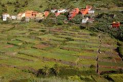 ARURE,戈梅拉岛,西班牙:在Arure村庄附近的培养的露台的领域 免版税库存照片
