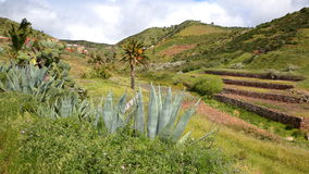 ARURE,戈梅拉岛,西班牙:在Arure附近的培养的露台的领域与芦荟前景的维拉植物 免版税库存照片