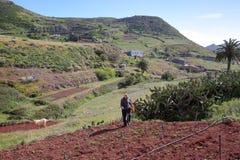 ARURE,戈梅拉岛,西班牙- 2017年3月21日:一位农夫在与露台的领域一起使用在背景中 免版税库存照片