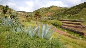 ARURE LA GOMERA, SPANIEN: Kultiverade terrasserade fält nära Arure med aloeVera växter i förgrunden Royaltyfri Foto