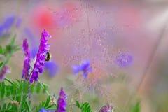 Arveja de pájaro, amapolas, prado de la flor Imagen de archivo libre de regalías