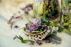 arvense φλυτζανιών equisetum εστίασης naturopathy εκλεκτικό τσάι έγχυσης αλογουρών γυαλιού βοτανικό Στοκ Φωτογραφίες