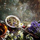 arvense filiżanki equisetum ostrości szklanej ziołowej horsetail infuzi naturopathy selekcyjna herbata obraz royalty free