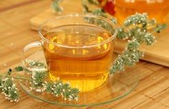 arvense filiżanki equisetum ostrości szklanej ziołowej horsetail infuzi naturopathy selekcyjna herbata Obraz Stock