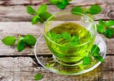 arvense filiżanki equisetum ostrości szklanej ziołowej horsetail infuzi naturopathy selekcyjna herbata Zdjęcia Stock