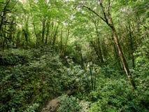 Arvoredo da floresta verde densa com córrego secado fotografia de stock royalty free