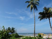 Arvoredo litoral e duas palmeiras do coco foto de stock