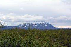 Arvoredos árticos do vidoeiro no fundo de picos nevado em Islândia Foto de Stock