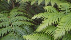 Arvoredos das samambaias em uma floresta tropical úmida filme