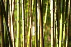 Arvoredos do bambu Fotografia de Stock