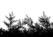 Arvores_slht_04 ilustração do vetor