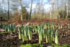 żarówki wiosna Zdjęcie Royalty Free