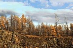 Arxan στο εσωτερικό πάρκο εθνικών δρυμός της Μογγολίας Στοκ Εικόνα
