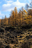 Arxan στο εσωτερικό πάρκο εθνικών δρυμός της Μογγολίας Στοκ Φωτογραφία