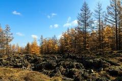 Arxan στο εσωτερικό πάρκο εθνικών δρυμός της Μογγολίας Στοκ Εικόνες