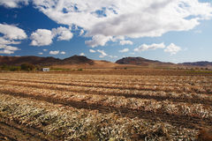 Arxan field of corn Royalty Free Stock Photos