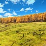 Arxan sceneria w Wewnętrznym Mongolia Obrazy Stock