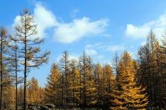 Arxan w Wewnętrznym Mongolia lasu państwowego parku Obraz Royalty Free