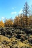 Arxan w Wewnętrznym Mongolia lasu państwowego parku Obrazy Royalty Free